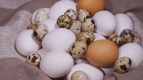 Bird eggs stock video