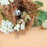 Bird eggs in nest. Easter bird eggs in a nest on natural cork background stock photo