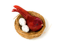 bird eggs nest Στοκ Φωτογραφίες