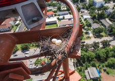 Bird eggs in a nest on the communication tower Stock Image