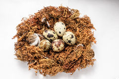 Bird eggs in the nest Royalty Free Stock Photo