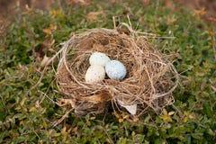Bird eggs in a nest Stock Photos