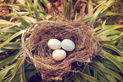 Bird eggs in a nest Stock Photo