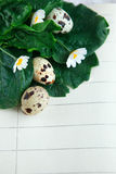 Bird eggs on notebook Royalty Free Stock Photos