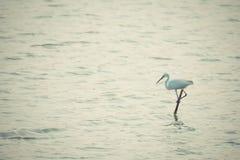 Bird (Egret or Heron) Royalty Free Stock Photo