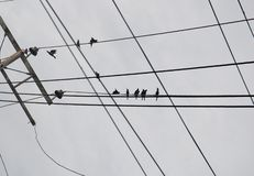 Bird on electric cable Royalty Free Stock Photo