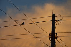 Bird on electric wire on sunset Royalty Free Stock Photos