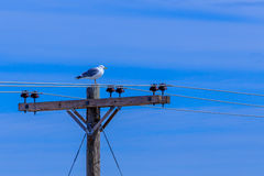 Bird on Electrical Wire Royalty Free Stock Photos