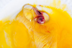 Bird embryo Stock Photo