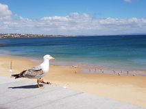 Bird enjoys the view over the sea royalty free stock photo