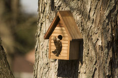 Bird Entering Birdhouse Stock Image