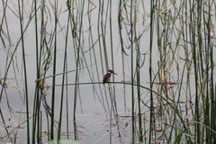 Bird in Ethiopia Royalty Free Stock Photos