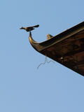 Bird eaves. Nepal historic building in detail Stock Image