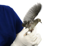 Bird Exam Royalty Free Stock Photo