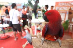 Bird exhibition Royalty Free Stock Photography