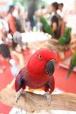 Bird exhibition Royalty Free Stock Photos