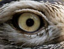 Bird eye Stock Photography
