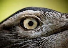 Bird eye Royalty Free Stock Images
