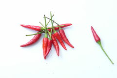 Bird eye's chillies. A group and a pc of bird eye's chillies which also name chilli padi in S.E. Asia is a spicy food ingredients royalty free stock photo
