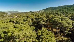 Bird-eye view at green hills with white plume of smoke rising up between pine trees in forest. Aerial, 4k. stock video footage