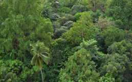 Bird eye view of nature green trees. Forest Stock Images