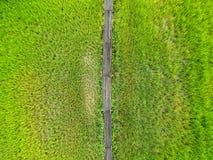 Bird eye view rice field at Thailand Stock Image