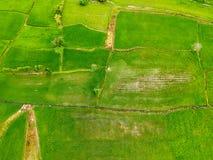Bird eye view rice field at Thailand Stock Photos