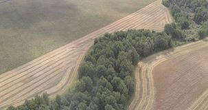 Bird eye view wood among yellow wheat field at harvesting. Fantastic bird eye view green wood among yellow ripe wheat field at harvesting time on autumn day stock video footage