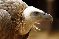 Bird face Royalty Free Stock Photo