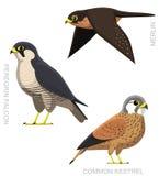 Bird Falcon Set Cartoon Vector Illustration Royalty Free Stock Photo