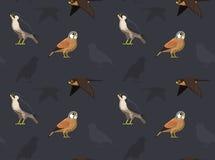 Bird Falcon Wallpaper Stock Images