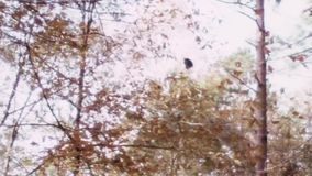 Bird falling from tree to the ground in forest stock footage