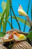Bird false Royalty Free Stock Images