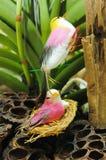 Bird false Royalty Free Stock Photo