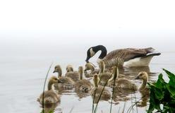 Bird family Royalty Free Stock Photography