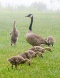 Bird family explore Royalty Free Stock Photos
