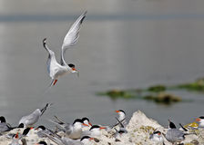 Bird family Royalty Free Stock Image