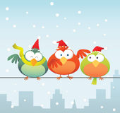 Bird family with santa hat Stock Images
