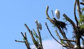 Bird. A bird family in tree Stock Image