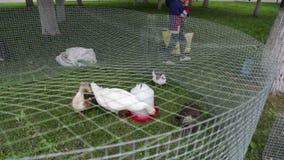 Bird farm green grass. Walk bird farm green grass stock video
