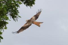 Bird, Fauna, Accipitriformes, Bird Of Prey stock photography