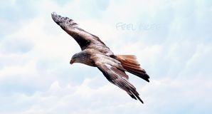 Bird, Fauna, Accipitriformes, Bird Of Prey stock photo