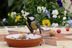 Bird, Fauna, Beak, Bird Food Royalty Free Stock Photography