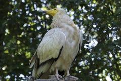 Bird, Fauna, Beak, Bird Of Prey Royalty Free Stock Image