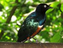 Bird, Fauna, Beak, Blackbird Stock Photo