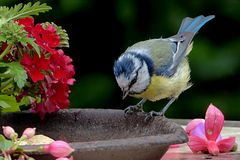 Bird, Fauna, Beak, Bluebird Stock Image