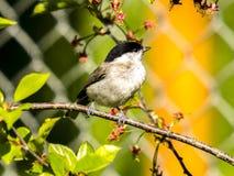Bird, Fauna, Beak, Branch Royalty Free Stock Photo
