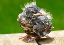 Bird, Fauna, Beak, Close Up stock image