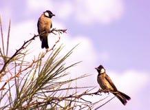 Bird, Fauna, Beak, Ecosystem Royalty Free Stock Photography