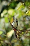 Bird, Fauna, Beak, Ecosystem Royalty Free Stock Photo